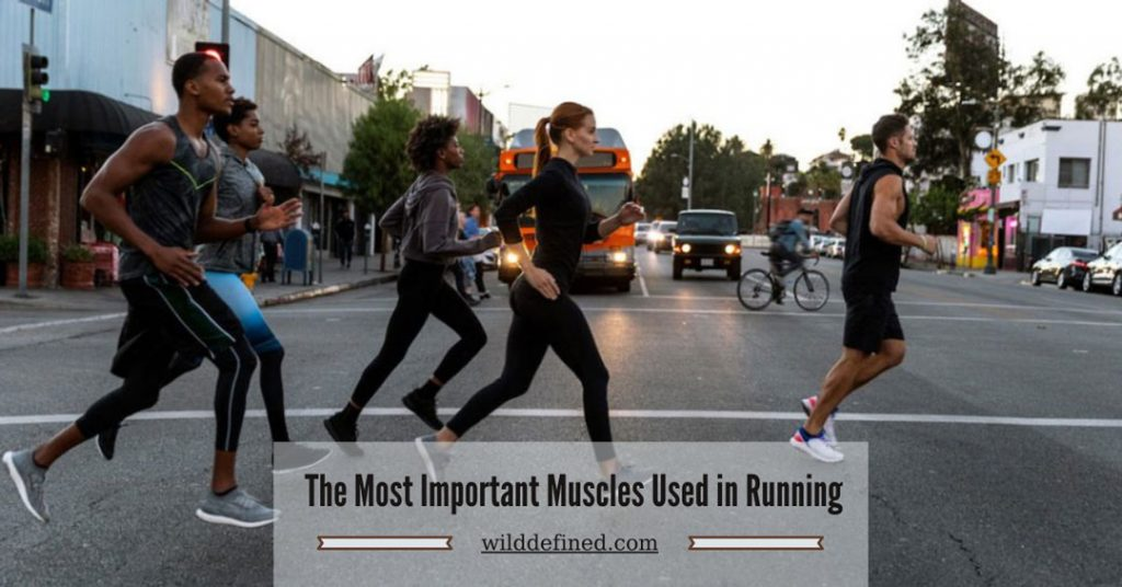 The Most Important Muscles Used in Running – Runner's Guide